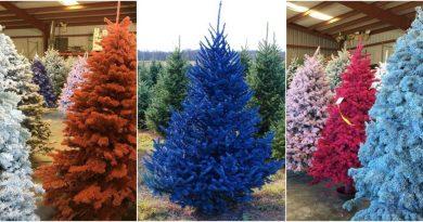 Barevné vánoční stromky budou trendy letošního roku