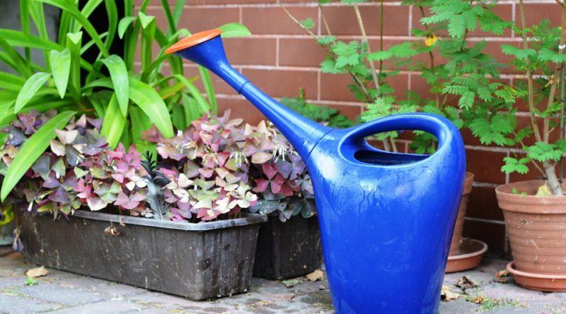Tipy na úsporu vody na zahradě