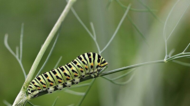 Běžní škůdci na zahradě a tipy jak se jich rychle zbavit