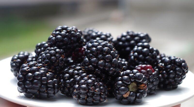 Proč zařadit do jídelníčku ostružiny a jejich zdravotní výhody