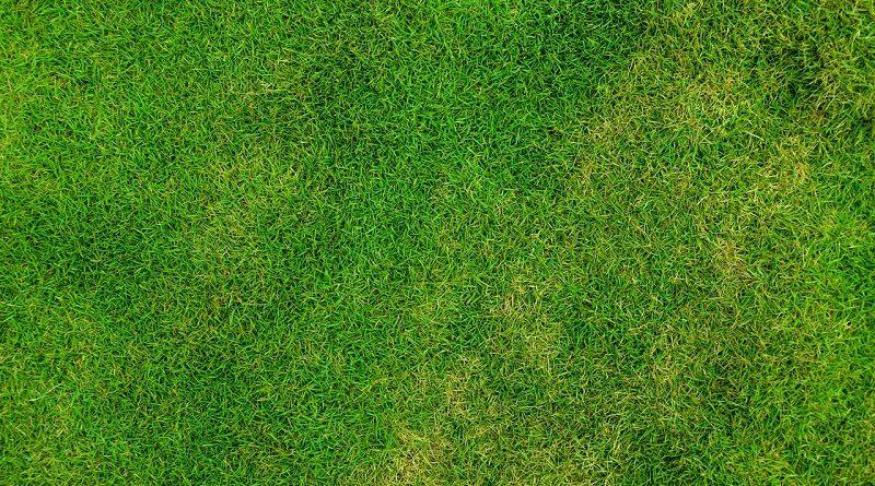 Proč je naprosto v pořádku nechat trávník v létě zhnědnout