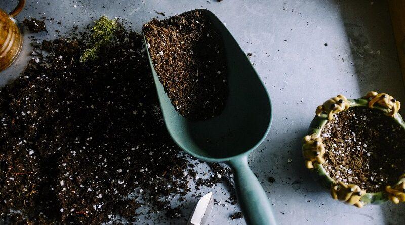 Jednoduché metody jak zvýšit kyselost půdy pro rostliny