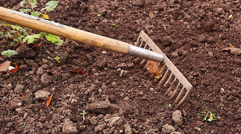Proč je pro pěstování důležitá zdravá půda a jak ji vytvořit