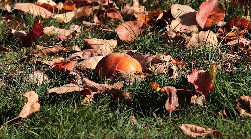 Důležité tipy jak na podzim zazimovat zahradu a trávník