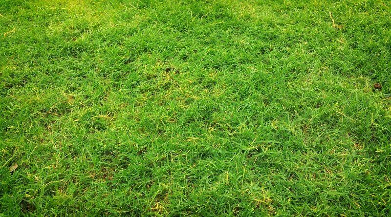Důvody proč jsou suchá místa v trávníku a jak se jich zbavit