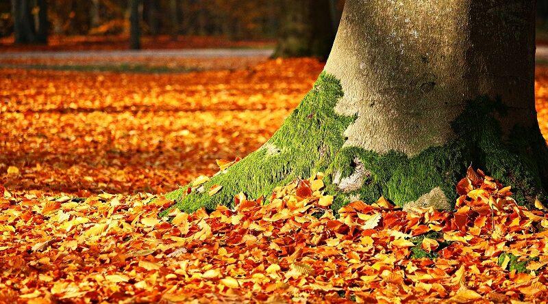 5 nejlepších způsobů jak využít podzimní listí na zahradě