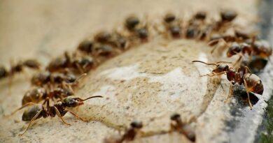 Jak se rychle zbavit mravenců v domě a prevence před mravenci