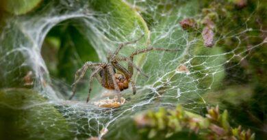 Jak se rychle zbavit pavouků, prevence a jak vyhnat pavouky