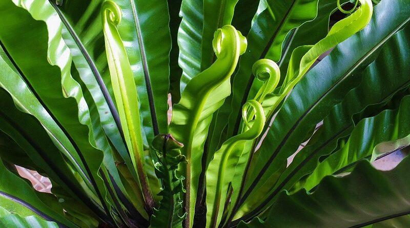 Které jsou ty nejlepší pokojové rostliny vhodné do koupelny