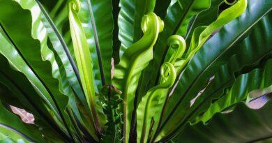 Proč pokojová rostlina přestala růst a tipy jak tomu zabránit