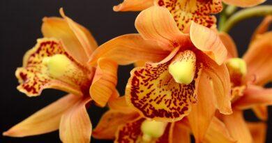 Tipy jak pěstovat krásné orchideje v interiéru po celý rok